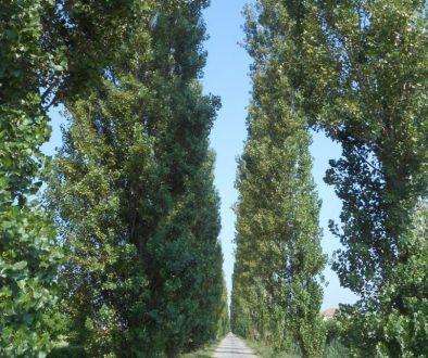 viale dei pioppi, Corbola